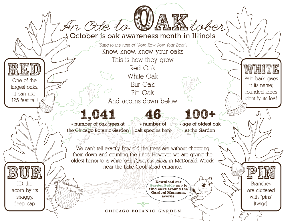 An OAKtober infographic to color.