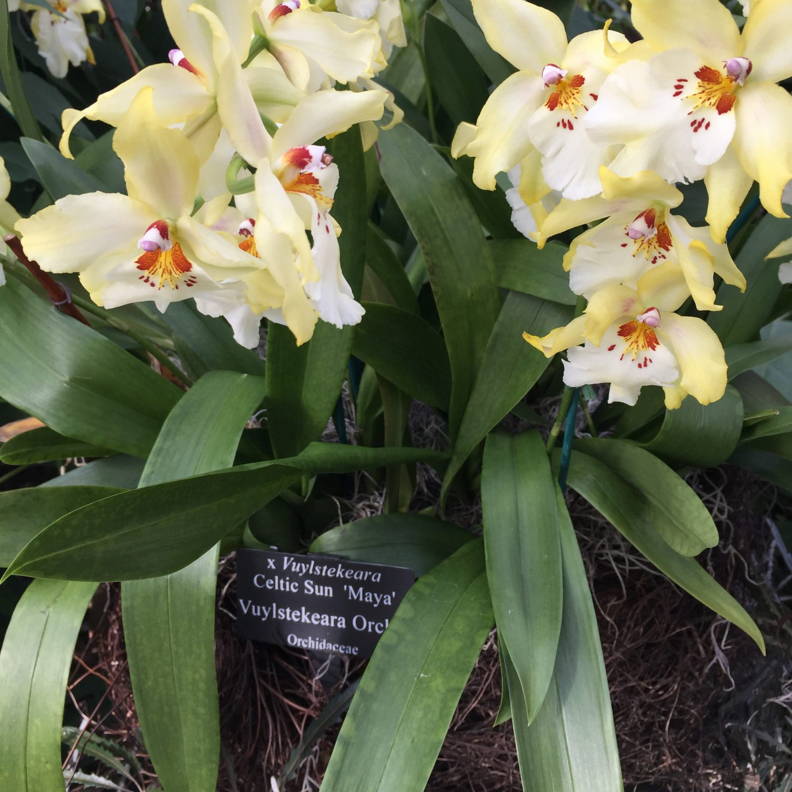 Orchid with plant label