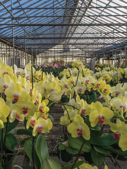 Some greenhouses will babysit your orchids for you.