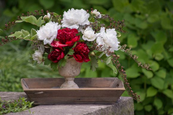 Storing peony stems allows you to use early and mid-season blossoms together in an arrangement.