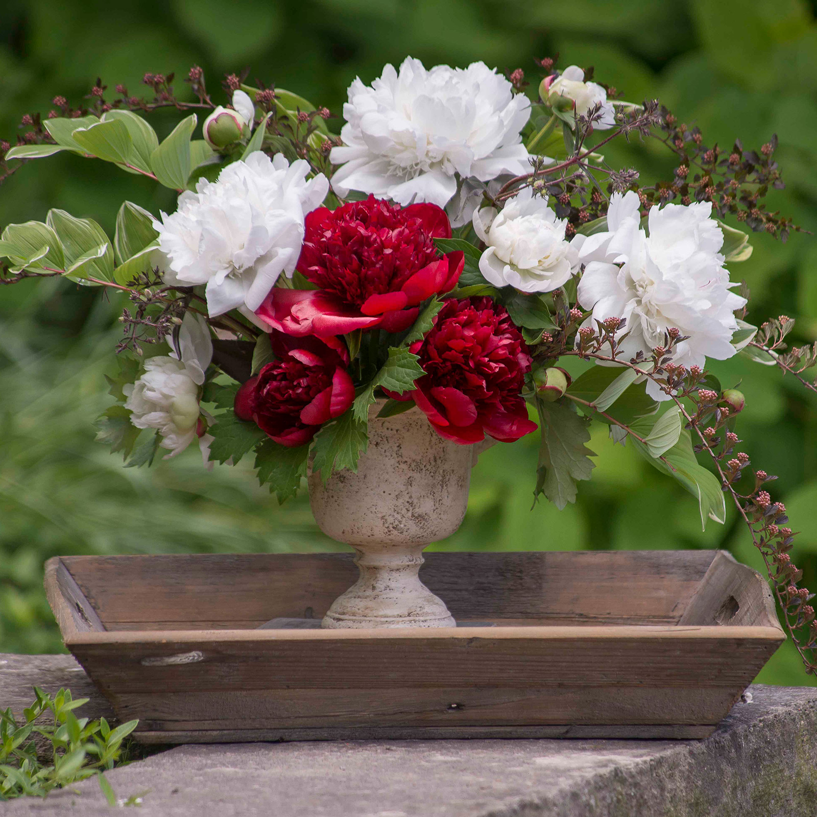 Make Peony Blooms Last Longer