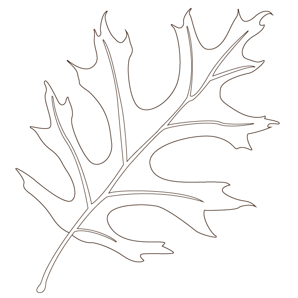 pin oak leaf illustration
