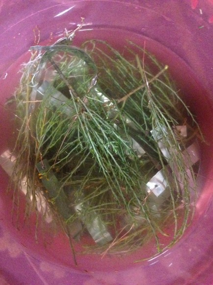 PHOTO: Tagged plant cuttings in a small bowl.
