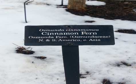PHOTO: Sample of a display label in the Chicago Botanic Garden.