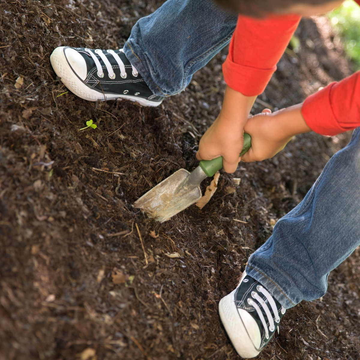 Planting Bulbs with Children