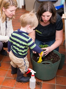 PHOTO: a small boy potting up a plant.