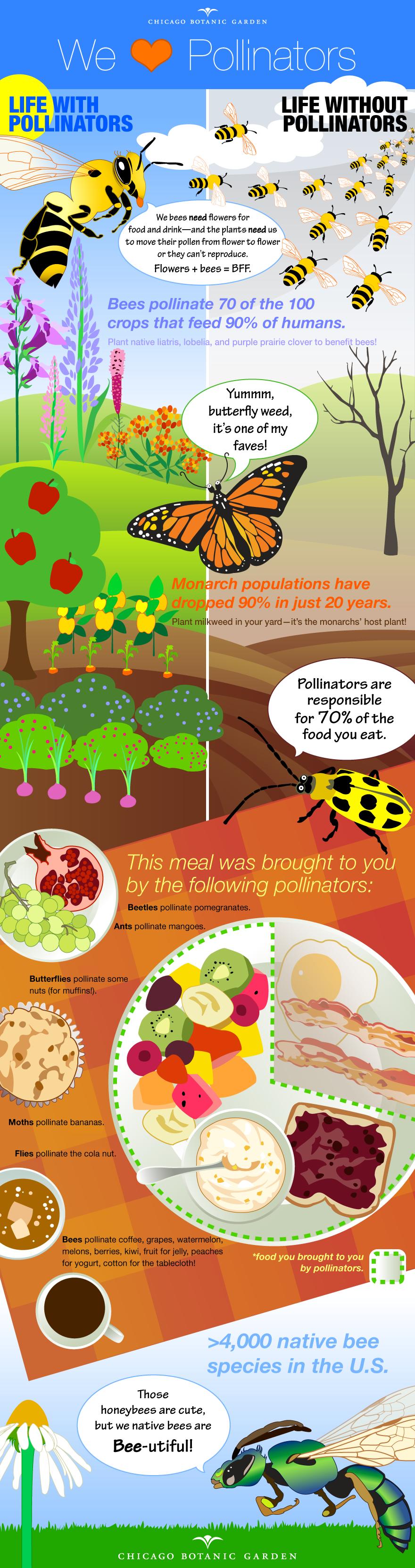 PHOTO: Pollinator infographic.