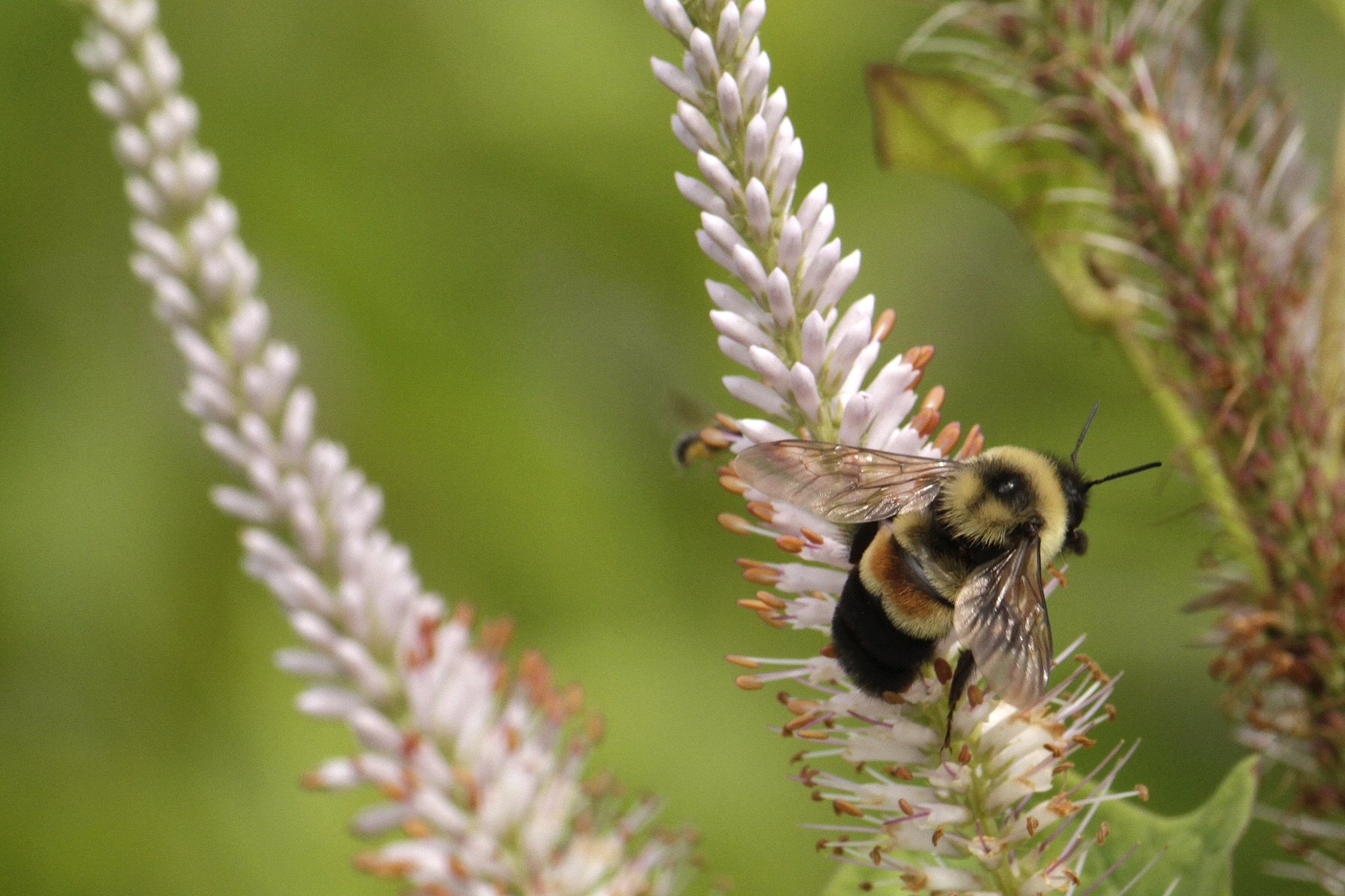 Take 5 steps to bring back pollinator populations