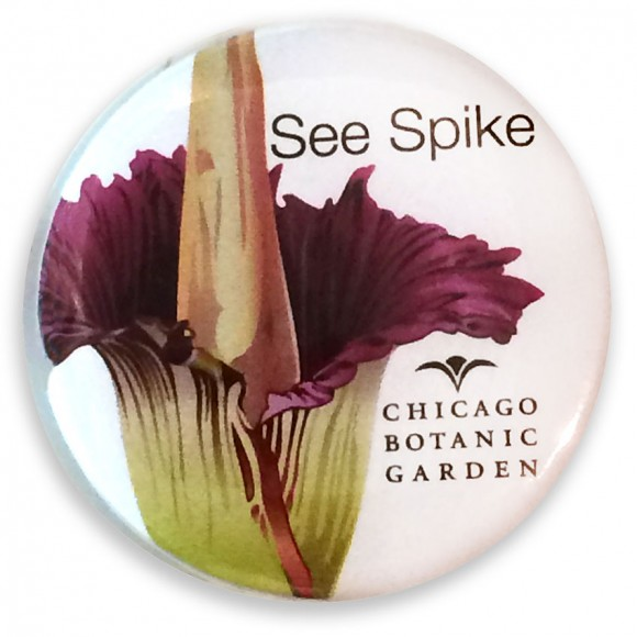 """""""See Spike"""" button corpse flower"""