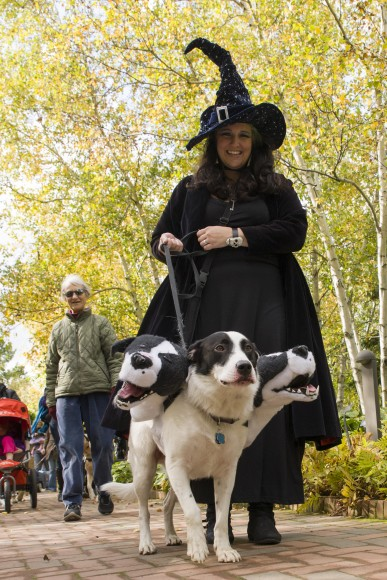 """PHOTO: Spooky Pooch parade favorite Cerberus (or """"Fluffy"""" to Harry Potter fans) """"pawses"""" for a photo op."""