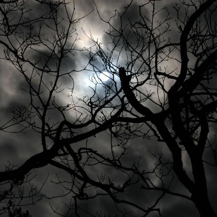 A Paranormal Perennial