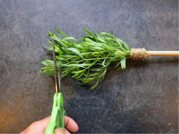 PHOTO: snipping tarragon for a garnish.