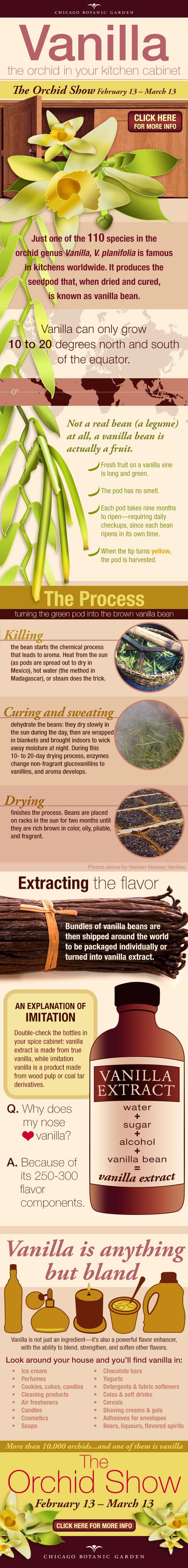 Vanilla infographic.