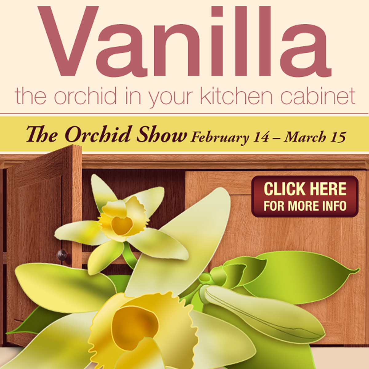 PHOTO: Featured image for full vanilla infographic.