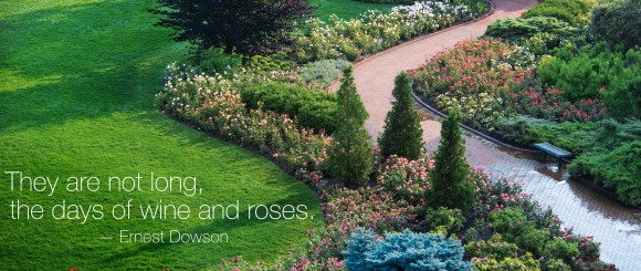 PHOTO: The Krasberg Rose Garden in summer.