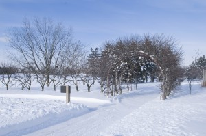 PHOTO: The apple archway in winter (in the Fruit and Vegetable Garden).