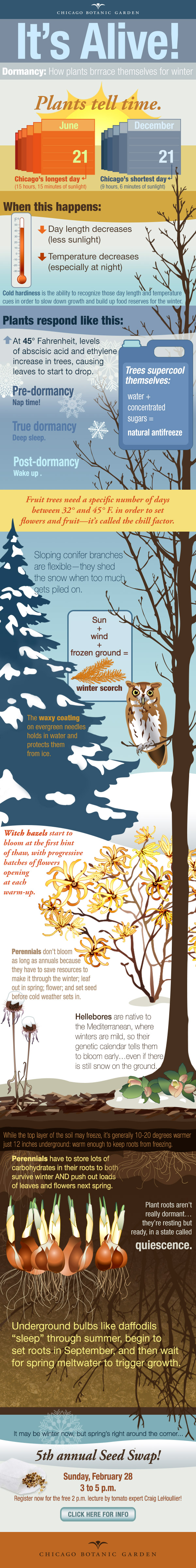 ILLUSTRATION: An infographic about winter.